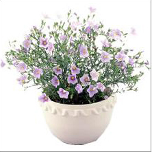 PP Gardening Flower Pot