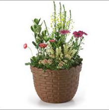 PP Flower Pot
